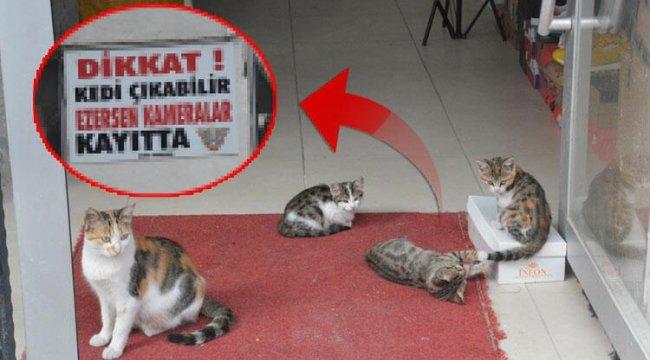 Beslediği 10 kedi ezilerek tek tek öldü... Çözümü bakın nasıl buldu!